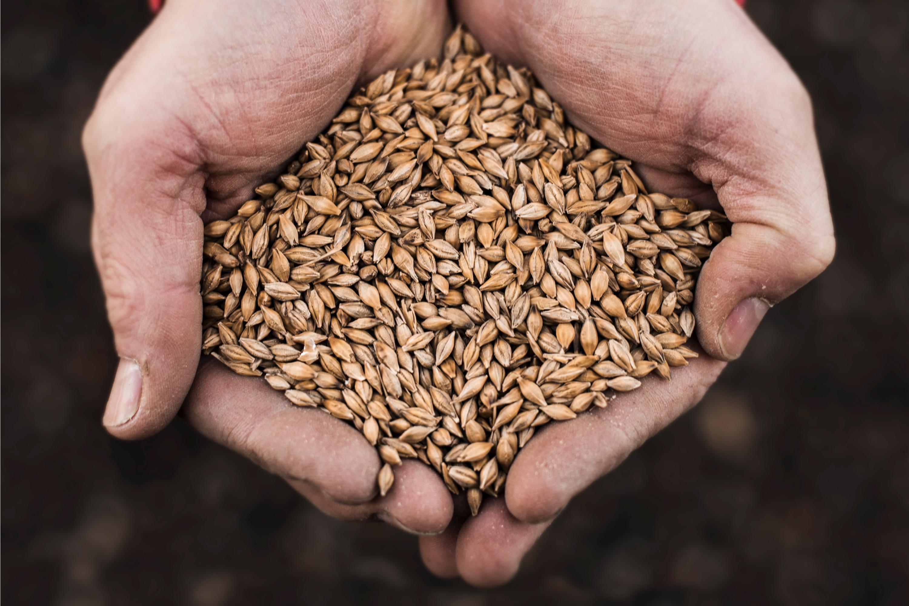 Daftmill Farm Barley