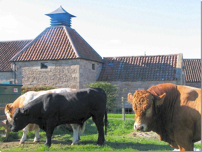 Daftmill: A Working Farm