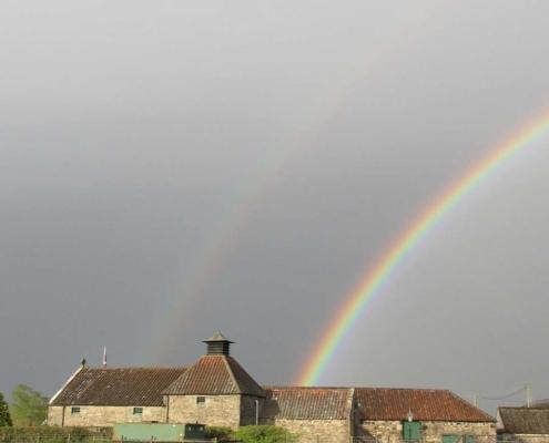 Daftmill Rainbow
